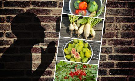 Le végétarisme est-il une nouvelle religion ?