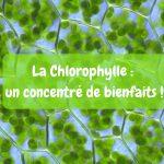 La chlorophylle : un concentré de bienfaits !