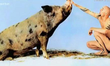 Le végétarisme en Allemagne (Vidéo)