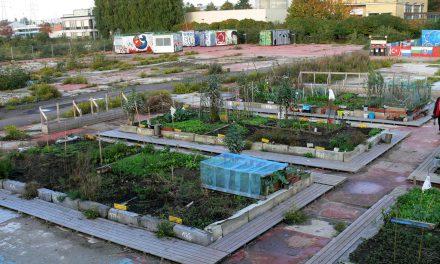 Agriculture urbaine, même le Ministère de l'Agriculture en parle