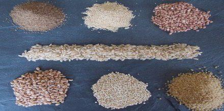 À Paimpol, les écoliers découvrent des céréales inhabituelles à la cantine