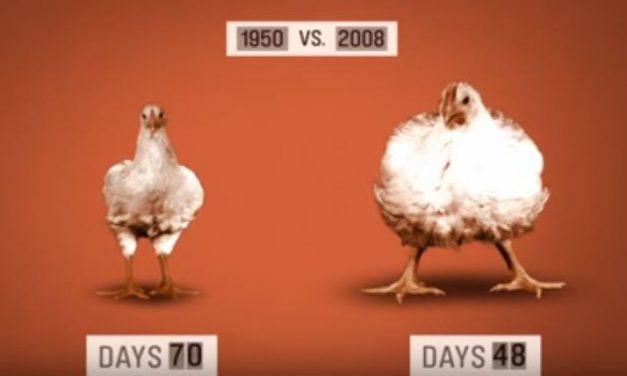 Les Alimenteurs ou comment l'agroalimentaire vous empoisonne (Vidéo)