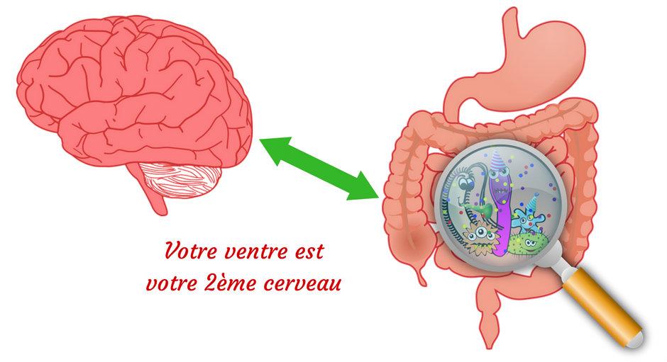 Votre ventre est votre 2ème cerveau : donnez-lui de bonnes choses à manger ! (Vidéo)