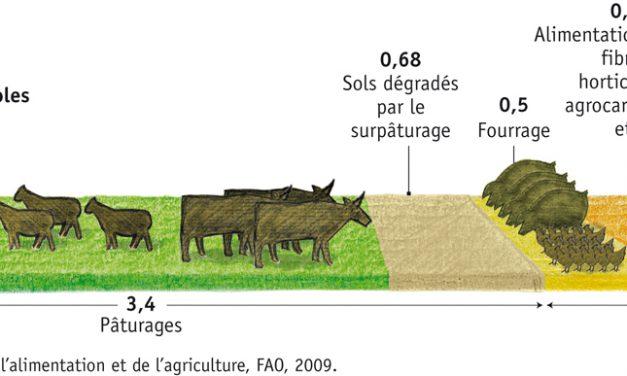 Le bœuf est la source de protéine la plus polluante