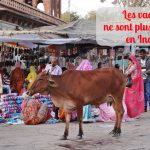 Les vaches ne sont plus sacrées en Inde (Info du jour)