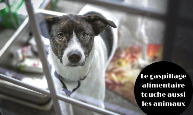 Le gaspillage alimentaire touche aussi les animaux (Actu)