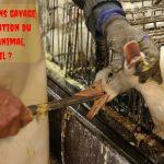 Le foie gras sans gavage : une amélioration du bien-être animal, paraît-il ?