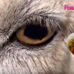 Pourquoi devenir Vegan ? (Vidéo)
