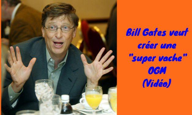 Bill Gates veut créer une «super vache» OGM (Vidéo)