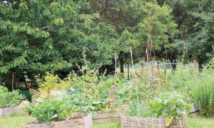 Comment avoir des légumes du jardin sans potager ?