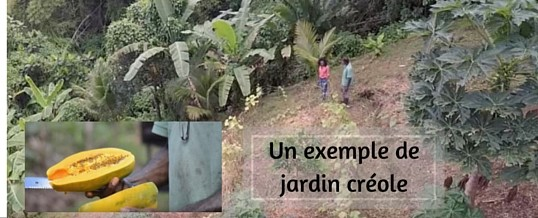 Un superbe jardin créole en Martinique (Vidéo)