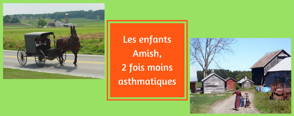 Les enfants Amish, 2 fois moins asthmatiques