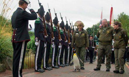 Même les militaires deviennent végétariens !