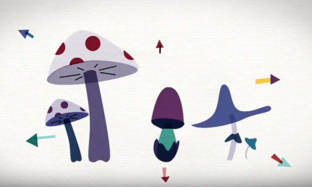 Les champignons peuvent-ils sauver la Planète ? (Vidéo)