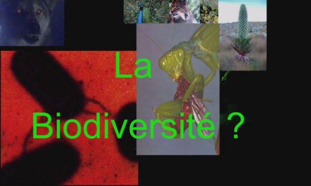 La biodiversité massacrée par l'agriculture moderne (Vidéo)