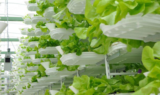 Les fermes verticales, la solution d'avenir pour nourrir la Planète ? (Vidéo)