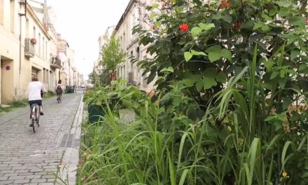 Pourquoi pas une rue jardin dans votre ville ? (Vidéo)