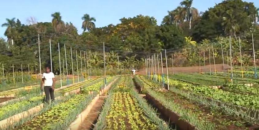 Cuba : pionnière de l'agriculture biologique par nécessité (Vidéo)