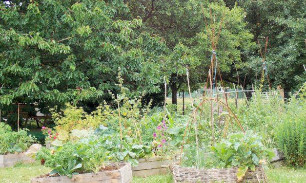 Un exemple de Jardin urbain en permaculture et en bio (Vidéo)