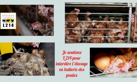 Je soutiens L 214 pour interdire l'élevage en batterie des poules (Actu)