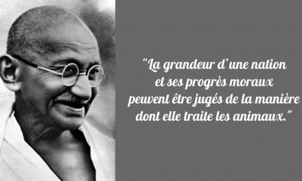 Gandhi et le végétarisme