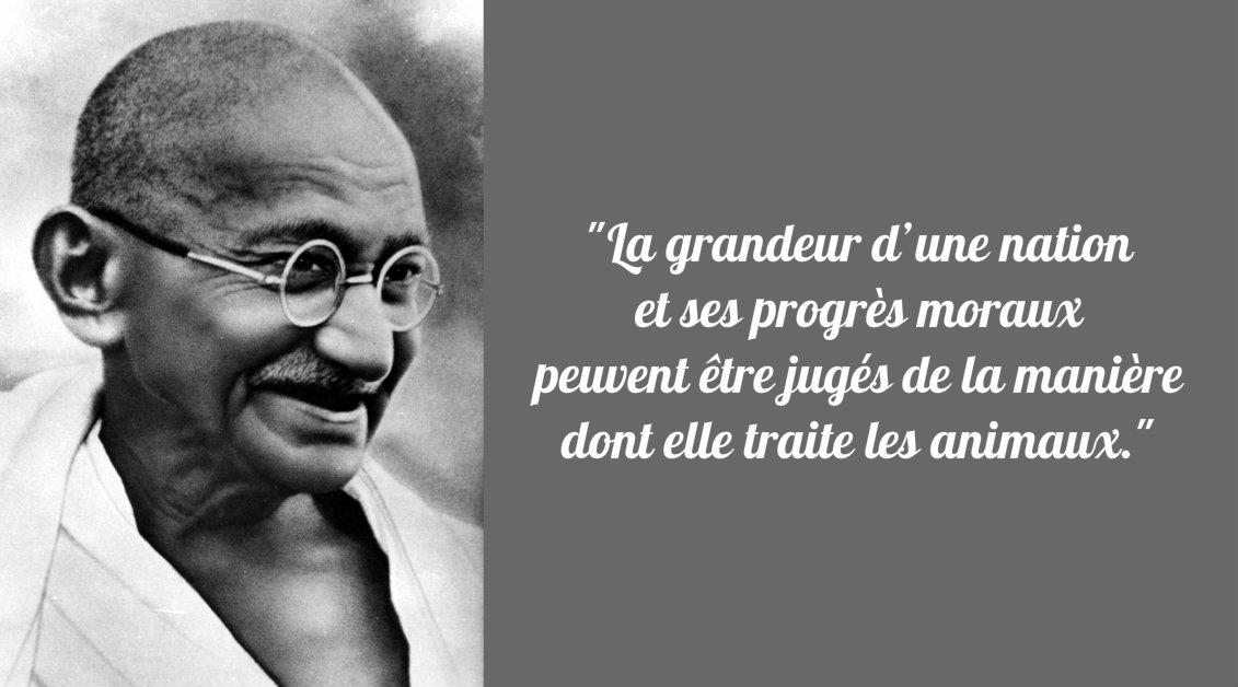 Gandhi Et Le Vegetarisme Recettes Saines Et Gourmandes