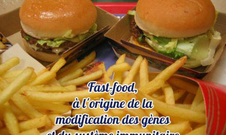 Fast-food, à l'origine de la modification des gènes et du système immunitaire (Actu)