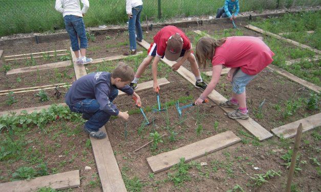Des jardins scolaires : pour quels bénéfices ?