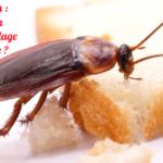 Des cafards : une solution anti-gaspillage alimentaire ?