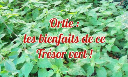 Ortie : les bienfaits de ce Trésor vert !
