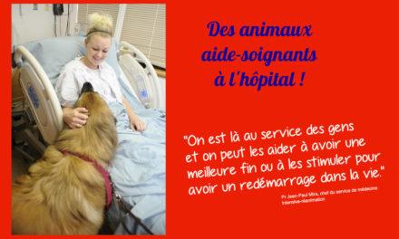 Des animaux aide-soignants à l'hôpital !