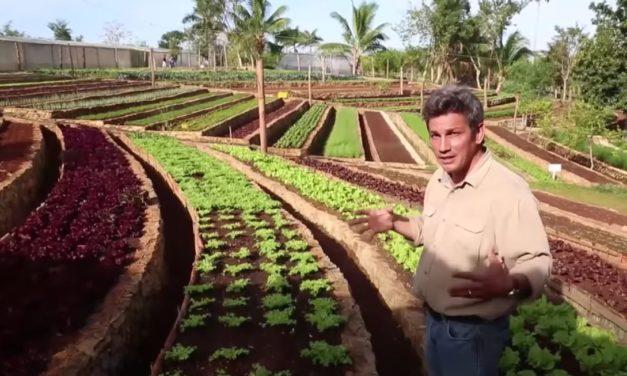 Tout est bio à Cuba ! (Vidéo)