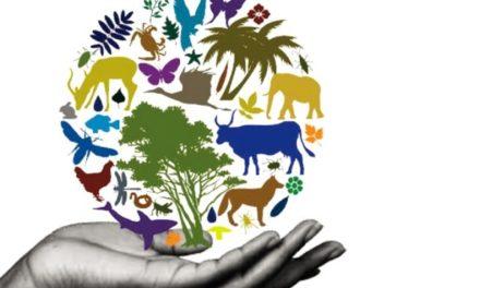 Les climatariens peuvent sauver l'Humanité !